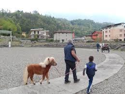 Arena e Pony